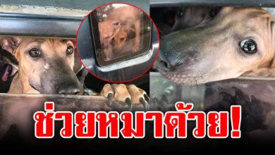 Photo of เจ้าของใจเหี้ยม จับหมา 3ตัว ขังในรถตากแดดทิ้งไว้หลายวัน