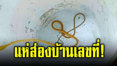 Photo of คอหวยแห่ส่องบ้านเลขที่ หลังสาวโพสต์ภาพ งูเขียวสีทอง